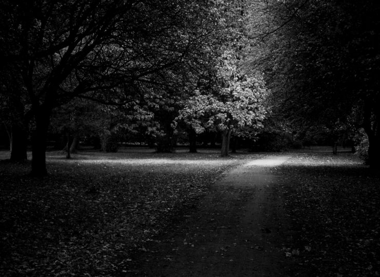 Daniella Witte_Autumn light_blwh_lu