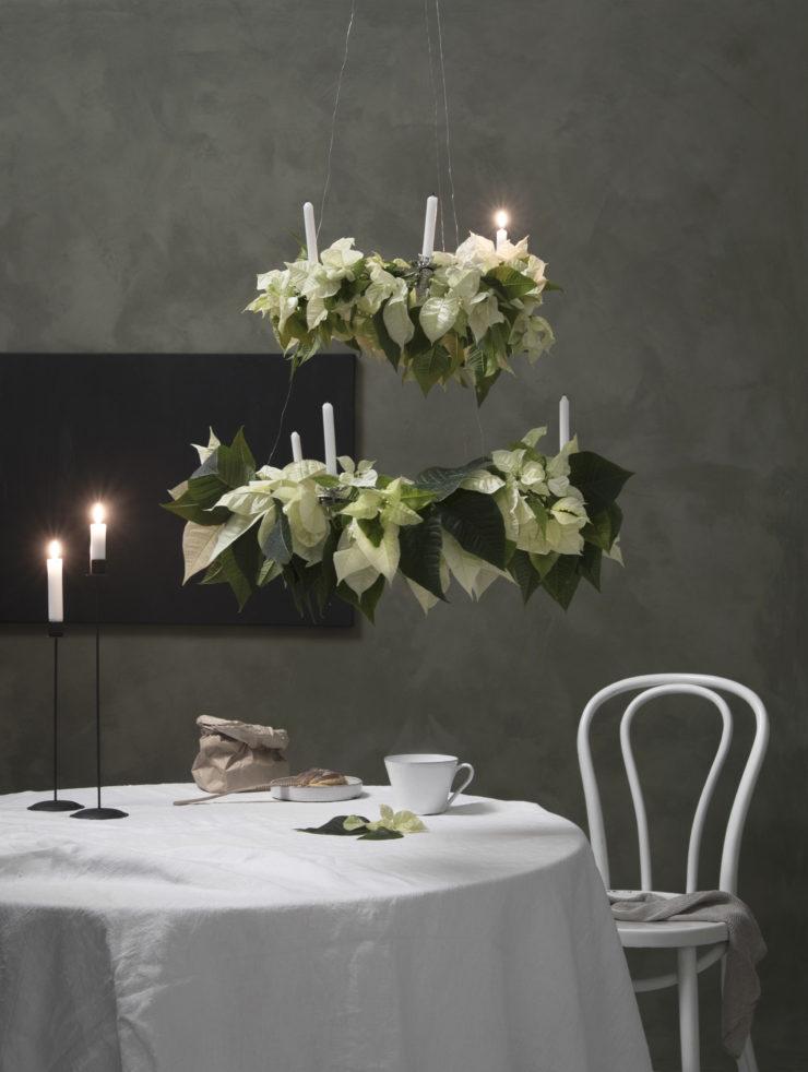 Blomsterframjandet_julstjarna_vit