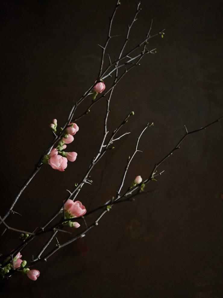 Studio_blommande rosenkvitt_Daniella Witte