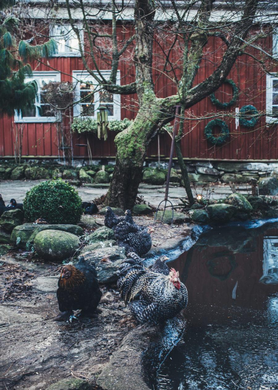 marie_birds_Kristin_Lagerqvist-8