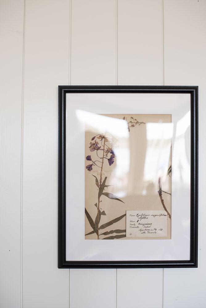 pressade blommor herbarium