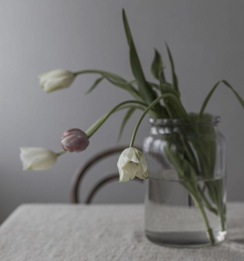 strenghielm_tuliplove.3