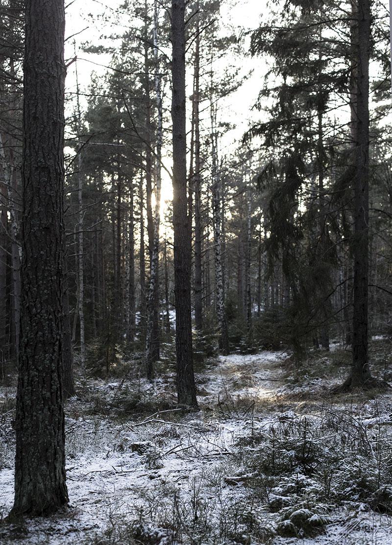 strenghielm_dog_n_woods.4