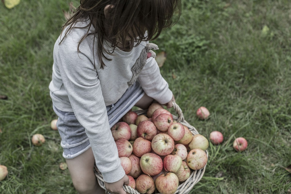 strenghielm_apples.5