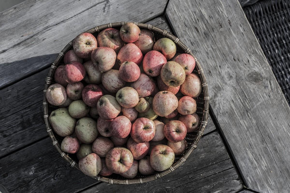 strenghielm_apples.8