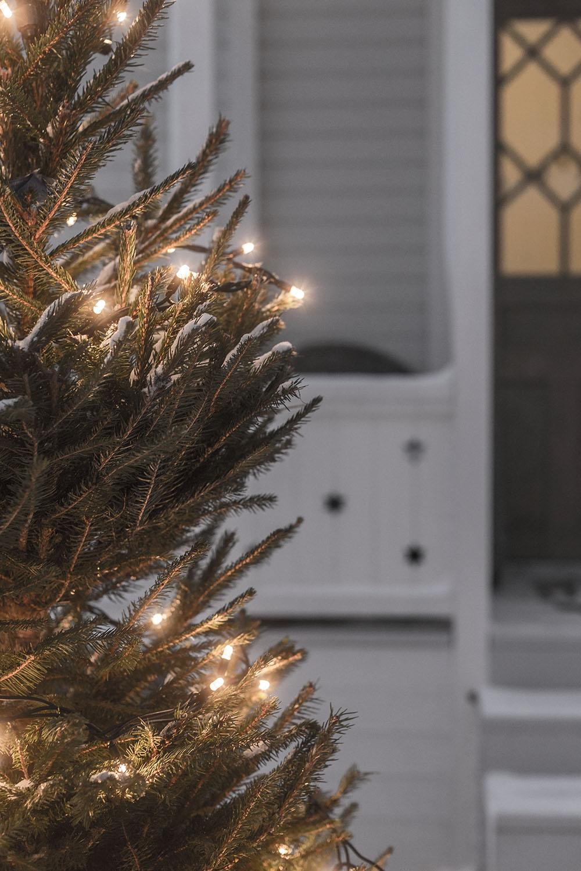 strenghielm_christmastree.3